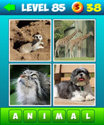 What's The Words: 4 Pics 1 Word Level 81 to 99